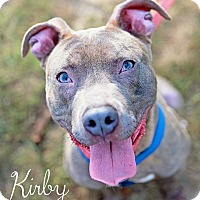 Adopt A Pet :: Kirby - Boston, MA