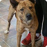 Adopt A Pet :: Liam - Lisbon, OH