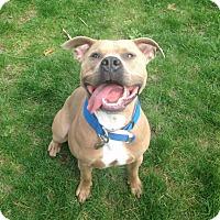 Adopt A Pet :: Maksimus - Grand Rapids, MI