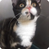 Adopt A Pet :: CALI - Bayside, NY