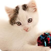 Adopt A Pet :: Noah and Nadia - Chaska, MN