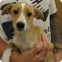 Adopt A Pet :: A570390 - Oroville, CA
