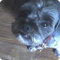 Adopt A Pet :: S Hudson - Lafayette, LA