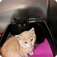 Adopt A Pet :: Jill - Chippewa Falls, WI