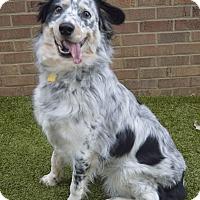 Adopt A Pet :: Piper - Germantown, TN