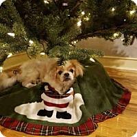 Adopt A Pet :: LEXI - Tallahassee, FL