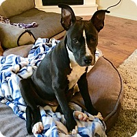 Adopt A Pet :: Cairo - Colorado Springs, CO