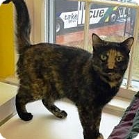 Adopt A Pet :: Georgette - Fairfax, VA
