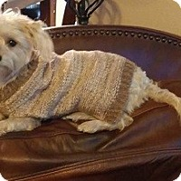 Adopt A Pet :: HANNAH - Mission Viejo, CA