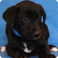 Adopt A Pet :: A.J. - Waldorf, MD
