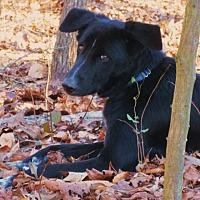 Adopt A Pet :: ARAMIS - Oswego, NY