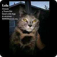 Adopt A Pet :: Lola - Temecula, CA
