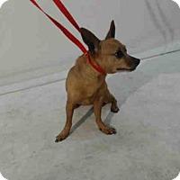 Adopt A Pet :: A371143 - Orlando, FL