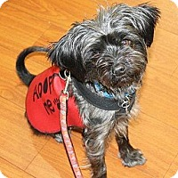 Adopt A Pet :: SAMMY~ADOPTED! - North Vancouver, BC