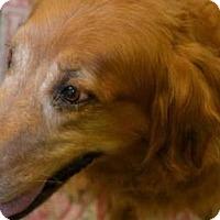 Adopt A Pet :: Chloe - Denver, CO