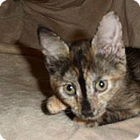 Adopt A Pet :: Sadie - Oxford, NY