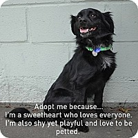 Adopt A Pet :: Trooper - Santa Monica, CA
