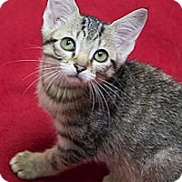Adopt A Pet :: Fig Newton - Chicago, IL