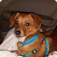 Adopt A Pet :: Marie - Hollis, ME