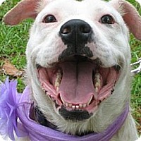 Adopt A Pet :: Angie - Williston, FL