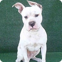 Adopt A Pet :: Pinky - Beverly Hills, CA