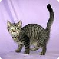 Adopt A Pet :: Ambrose - Powell, OH