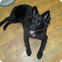 Adopt A Pet :: Loui - Elk River, MN