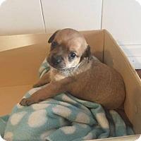 Adopt A Pet :: Mickey - Carlsbad, CA