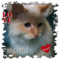 Adopt A Pet :: McBeth - Harrisburg, NC