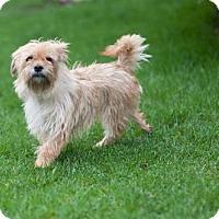 Adopt A Pet :: Tessa - Brooklyn Center, MN