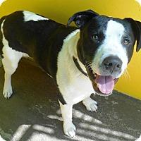 Adopt A Pet :: Calvin - Redding, CA