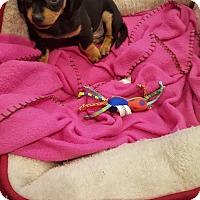 Adopt A Pet :: Luke Skywalker - Pearland, TX