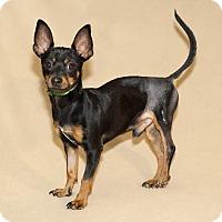 Adopt A Pet :: Papi - Thousand Oaks, CA