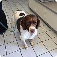Adopt A Pet :: MI/Backes - London, ON