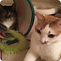Adopt A Pet :: Daisy & Joy - Richmond, VA