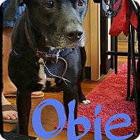 Adopt A Pet :: Obie - WESTMINSTER, MD