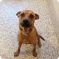 Adopt A Pet :: Bella - Aiken, SC