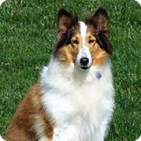 Adopt A Pet :: Jenny - Stony Brook, NY