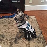 Adopt A Pet :: Journey - greenville, SC