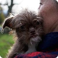 Adopt A Pet :: Itsy Bitsy - Long Beach, NY