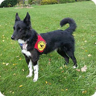 Border Collie Mix Dog for adoption in Highland, Illinois - Castle