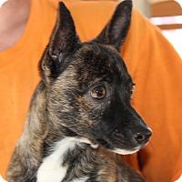 Adopt A Pet :: Sarah - Harmony, Glocester, RI