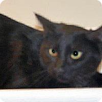 Adopt A Pet :: Margie - Wildomar, CA