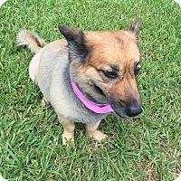 Adopt A Pet :: Kodiak - Key Biscayne, FL