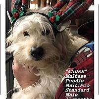 Adopt A Pet :: Andre (in adoption process) - El Cajon, CA