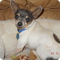 Adopt A Pet :: chico - haslet, TX