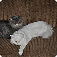 Adopt A Pet :: * LILLIE & MILLIE - Winder, GA