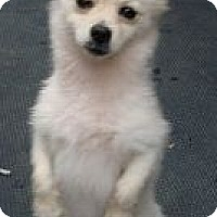Adopt A Pet :: Mojo - Brattleboro, VT