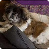 Adopt A Pet :: Wilson - Virginia Beach, VA