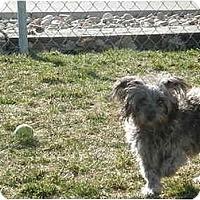 Adopt A Pet :: Bridgette - Meridian, ID